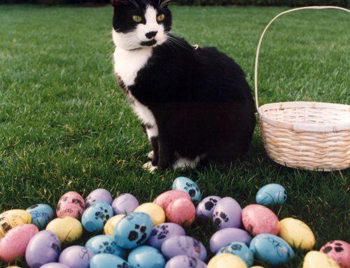 La historia detrás del Día Internacional del Gato