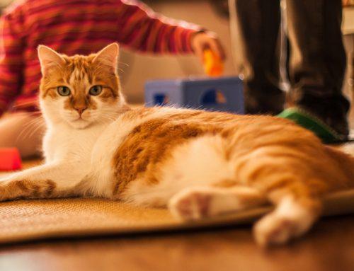 Conoce los beneficios de tener un gato en casa