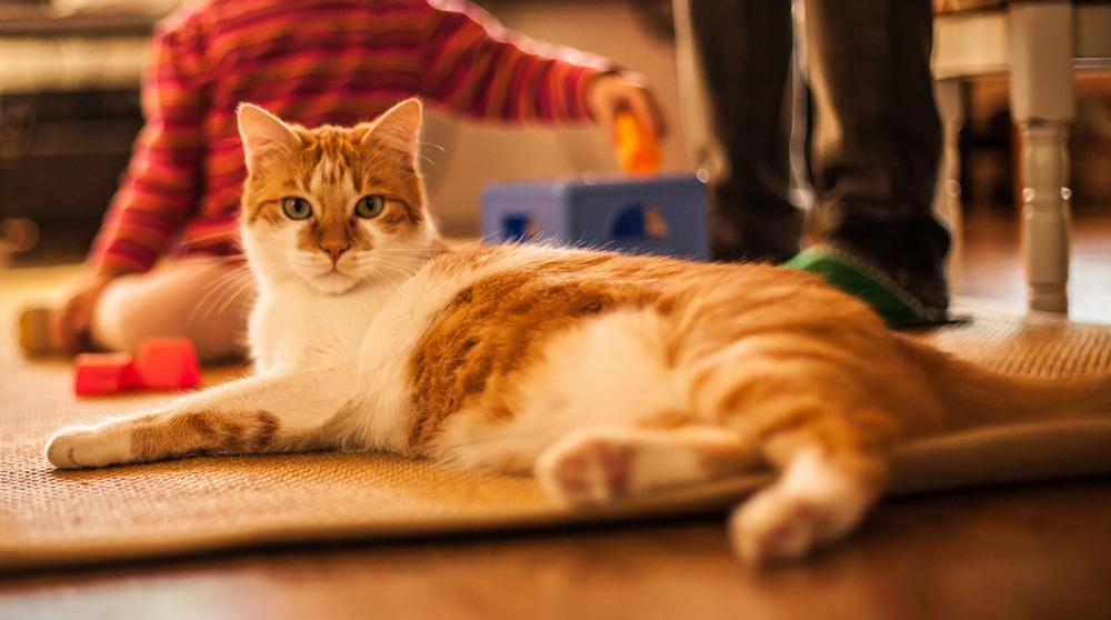 Beneficios de tener un gato | blackiecat.com